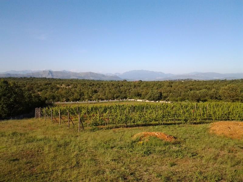 Ulcinj, Briska gora – ranč 36000m², sa 3 kuće, vinogradom i voćnjakom, blizu lovišta