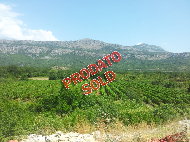 Podgorica, Piperi- Vineyard, 30.000m2 and wine production